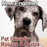 newengland pet friendly lodging